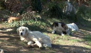 Ölüme Terkedilen Köpeklerin Yardımına Hayvanseverler Yetişti